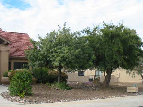 Desert trees give shade to the front of this house, and they are not alone.