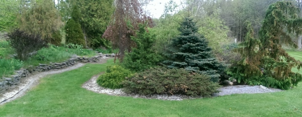 A fieldstone wall provides a nice border around this established older yard of conifers.