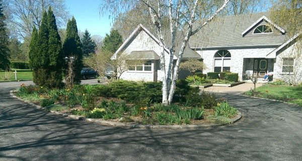 Circular driveway landscaping with a nice informal look with feature trees at either end of the center bed.
