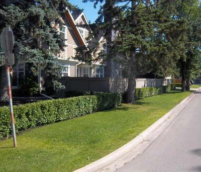 Low hedges are a good way to prevent people from cutting across your lawn.