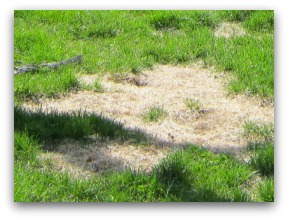 Lawn problems are not all the same and shouldn't be treated the same way. Diagnose and treat with the right medicine.