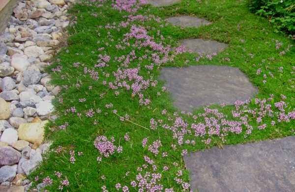 There are not many things more pleasing and inviting to the landscaping eye than stepping stone paths.