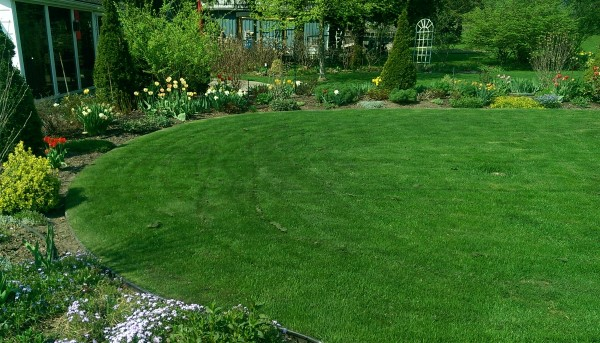 A Nice flowing curve on the garden defines an outdoor room to play or sit on the grass while enjoying the variety of plants.
