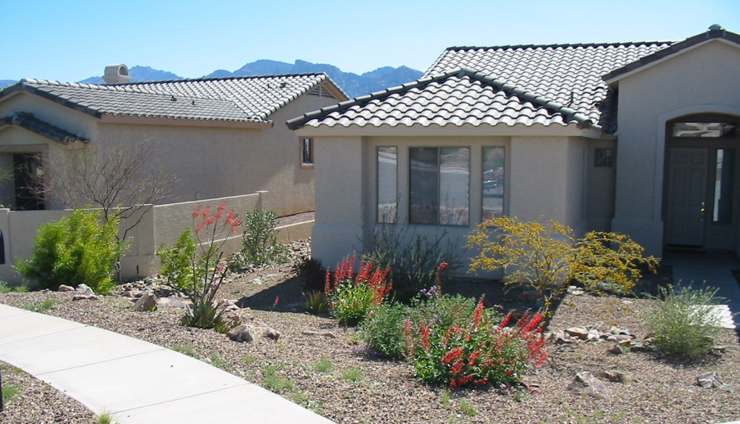 Some flowering desert plants give a variety of colour to this front yard.