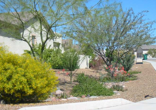 This side yard on a corner lot has desert plants set directly in the dry creek bed.