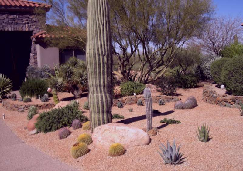 Working with the natural landscape and native desert plants saves on irrigation costs.