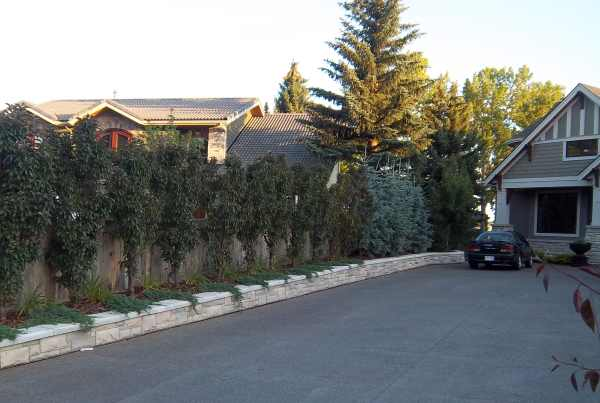 Effective driveway landscaping ideas for a narrow strip between houses that have longer driveways.