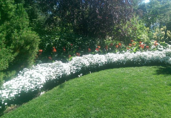 This lovely neutral white garden border is very simple with a touch of red on a mostly green pallet.