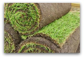 How to Sod