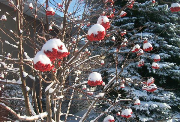 When selecting trees or shrubs, consider how they look through all the seasons.