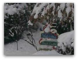 This snowman picture caught our attention as he holds this welcome sign. It is one of those simple, but quaint things that give so much character to this winter garden.