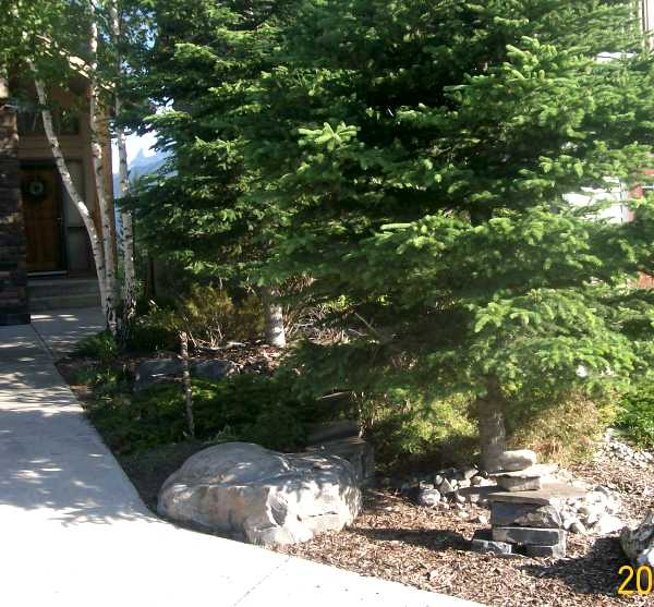 Feature boulders create a small garden bed in a small sloped piece of property between two houses.