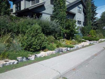Planting for privacy along the side yard.