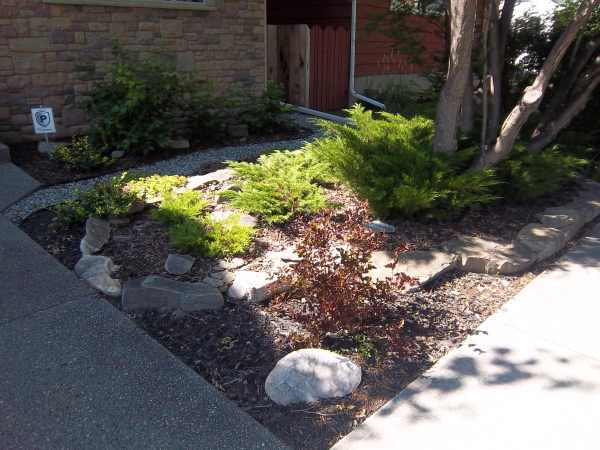 Driveway landscaping photo for Small no maintenance garden