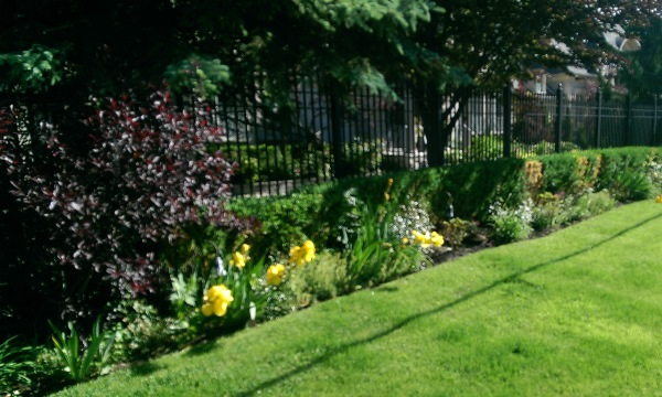 Iron fences are nicely softened with fence line border flower gardens, shrubs and trees.