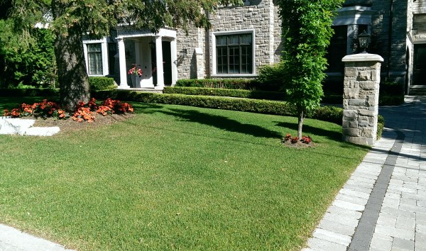 Some low hedges provide nice lines and form in this simple front yard design.