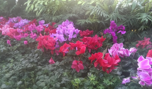 Limiting the number of types of plants and colours maintains simplicity in your garden.