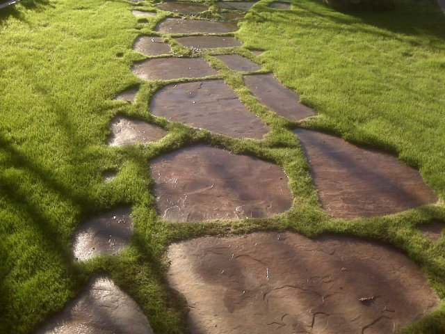 Another example of a stepping stone walkway set in the grass.