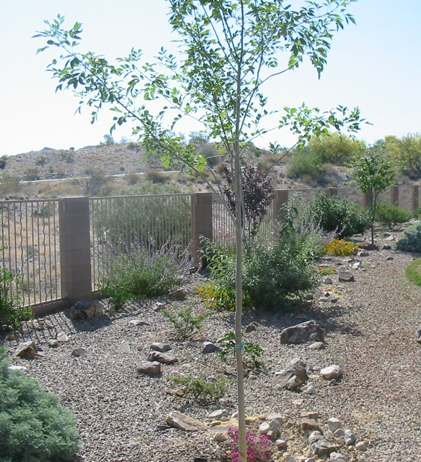 This backyard desert planting flows nicely along the back fence of this property.