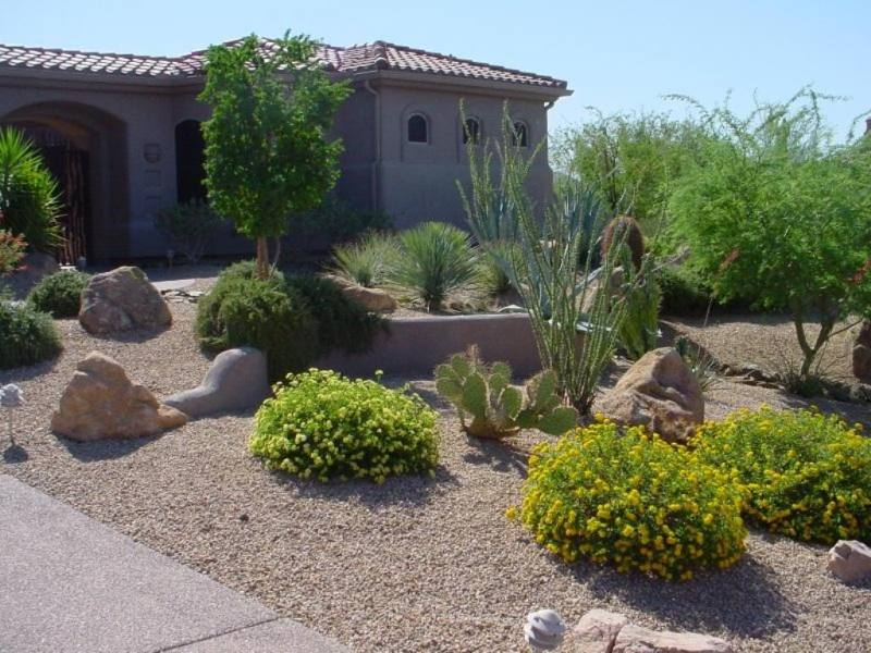Frontyard mixed plantings with mostly native desert plants.