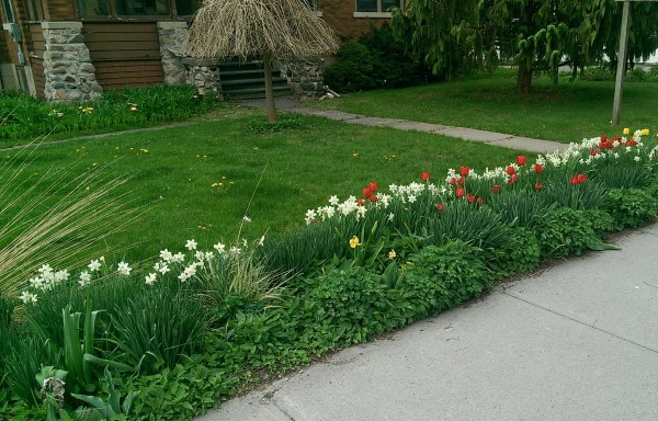 A sidewalk border creates a barrier and dresses up this front lawn with some colour.