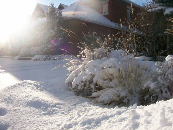 This lively garden bed in the summer, takes on a new look in the winter.